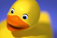 sweet rubber ducky