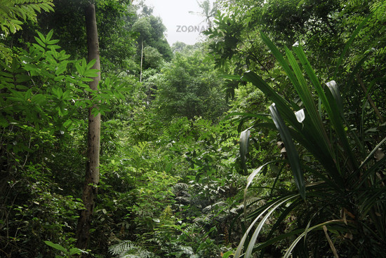 Series Rainforest views from Canopy Layer down to Forest Floor Layer & Photo Series: Rainforest views from Canopy Layer down to Forest ...