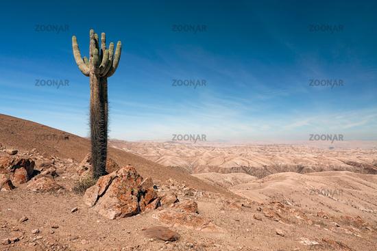 Reserve of Pampa Galeras near Nazca, Peru