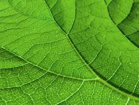 Leaf's Veinlet Texture Pattern