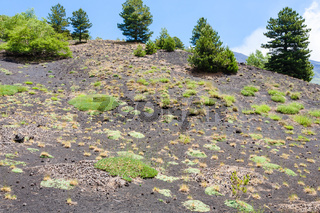 green grass on slope of old volcanic crater