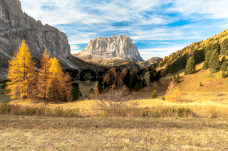 Foliage Passo Gardena Italy in autumn