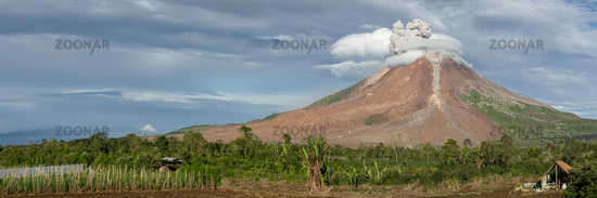 An early morning ash cloud eruption from the active volcano Mount Sinabung