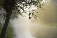 The shore of the Erft in the morning mist.