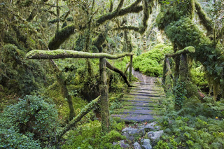 Maerchenwald Bosque Encantada, Carretera Austral, Patagonien, Chile