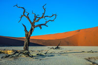 The dry trees