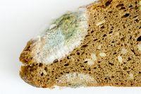 schimmelndes Brot
