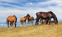 Beautiful landscape with horses