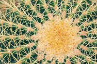 Cactus plant close up macro photo