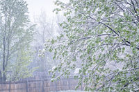 springtime snowstorm in Colorado