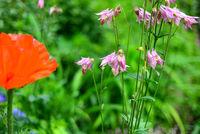 floraler Sommer Blumen Hintergrund mit Bokeh