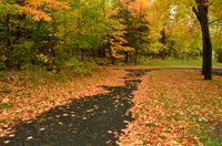 Colorful Autumn Leaves on a Path