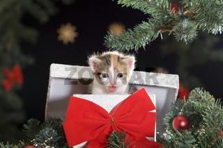 Kätzchen als Weihnachtsgeschenk  | cat kitten as Christmas present