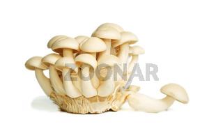 White Crab Mushrooms