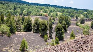 green trees on volcanic soil on slope of Etna