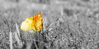 autumn leaves on grass