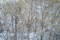 texture of trees with snow