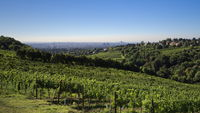 Vienna - Vineyards on the edge of town, Nussberg