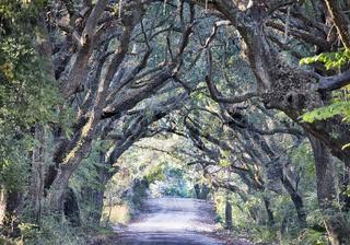 Botany Bay Plantation Spooky Dirt Road Marsh Oak Trees Tunnel with spanish moss on Edisto Island SC