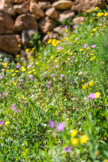 Colorful yellow and purple flowers on summer meadow
