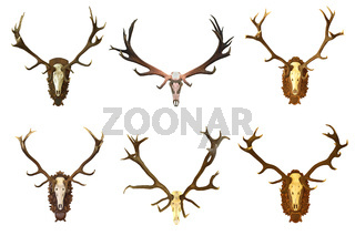 collection of huge red deer buck hunting trophies isolated over white background