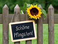 Schöne Pfingsten - Kreidetafel mit Sonnenblume im Garten