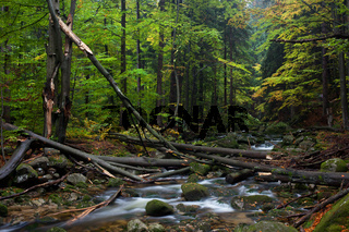 Forest Stream With Fallen Trees