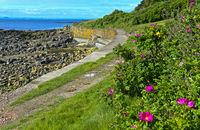 Fife Coastal Path near Crail, East Neuk of Fife, Scotland, Great Britain