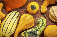 gourd and winter squash collection