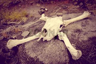 Horse skull and bones