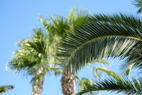 Leaves of a palm trees against blue sky