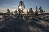 Frost covered swamp landscape in backlight, Lapland, Sweden