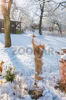 shrubs protected against winter of jute