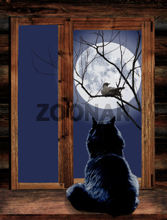 Katze im Fenster und Vogel auf Zweig am Mondschein