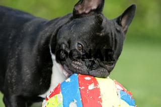mein Fussball