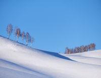 Belt of birch trees under hoarfrost on snow heels under blue sky in winter season