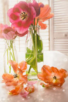 Colorful Spring tulips on table near window