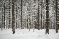 Harz Mountains - Winter forest, Germany