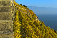 Vineyards in steep terrace cultivation rising above Lake Geneva, Lavaux, Switzerland