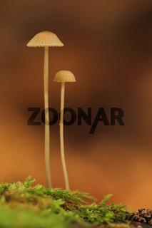 Pilze auf einem Baumstumpf