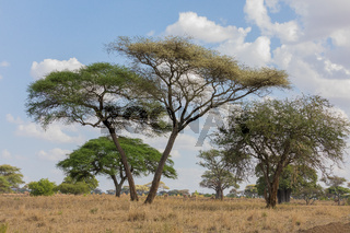 Landschaft im Tarangire Nationalpark, Tansania, Ost Afrika.