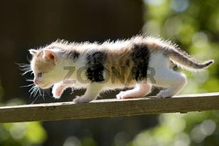 Kaetzchen auf Holzbrett, Kitten on wooden board