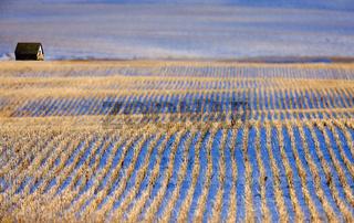 Prairie Landscape in Winter