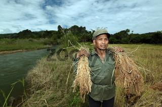 Ein Reisfeld in der Bergregion beim Dorf Kasi an der Nationalstrasse 13 zwischen Vang Vieng und Luang Prabang in Zentrallaos von Laos in Suedostasien.