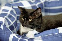 cat lying in her bed