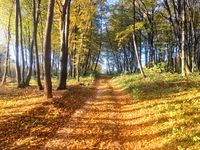 Autumn colorful forest with orange leaves