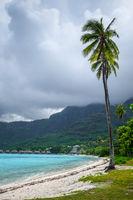 Palm trees on Temae Beach in Moorea island