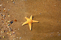 Summer Beach. Starfish and Small Seashell on the Sand from above.