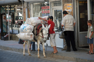 weißer Esel (Equus asinus f. asinus), Mardin, Ostanatolien, Türkei