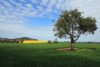 Harvest Fields in Central West NSW